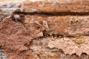 Termite inspection san antonio